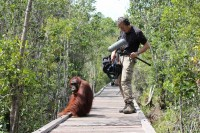 Capturing The Plight Of The Great Apes With DPA Microphones